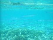 ビッグドロップオフ水中2